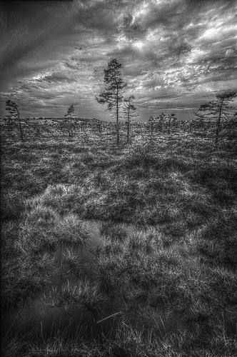 Im schwarzen Moor